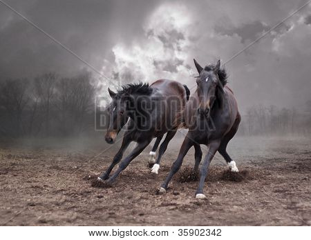 horses of a twilight