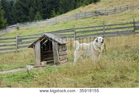 Cachorro e Casinha