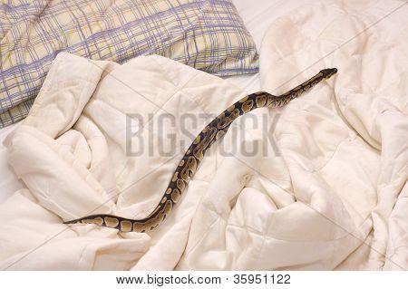 Snake On Quilt