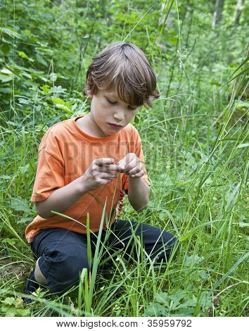 Young Boy Collecting Wild Strawberries