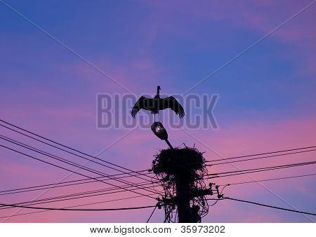 Stork In The Sunset