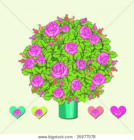 Rose bushes illustration with hearts
