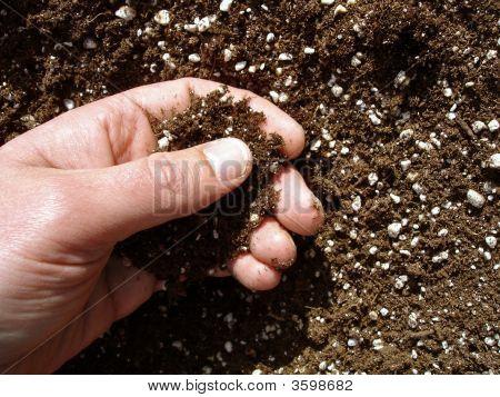 Hand In Soil