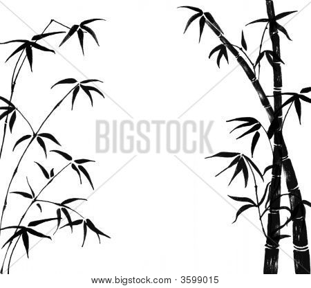 Branches Of A Bamboo On A White Background