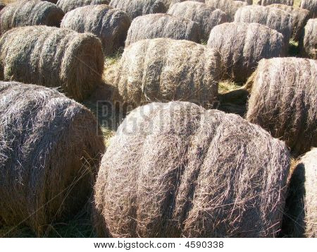 Weathered Down Hay
