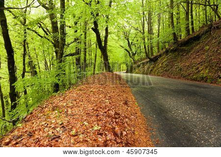 Spring landscape with road and beautiful green trees