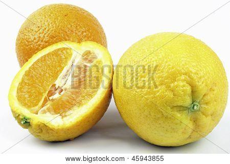 oranges on the white background