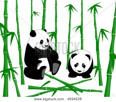 Chinese Giant Panda Eating Bamboo Shoots