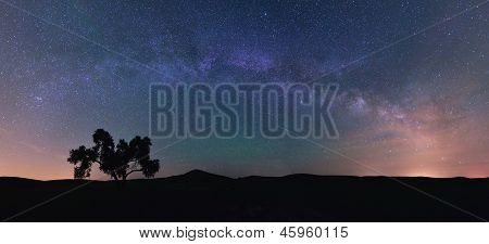 Milky Way And Cotton Tree