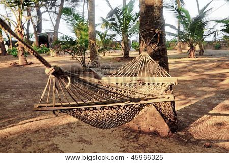 Tropical Garden Landscape Hammocks Coconut Trees