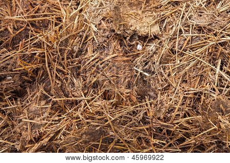 Close-up Of Manure Mixed With Hay