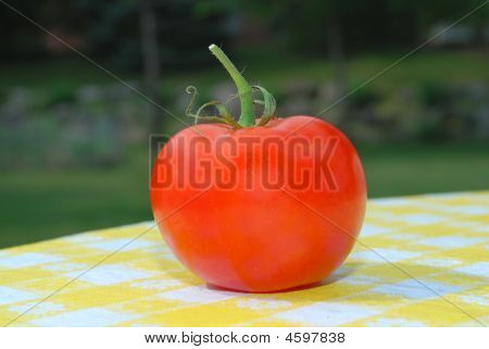 Fresh Tomato On A Picnic Table