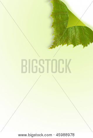 Page curl from spring leaf folded backwards with graduated background