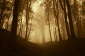 pic of eerie  - Forest with fog and dark trees at sunset - JPG