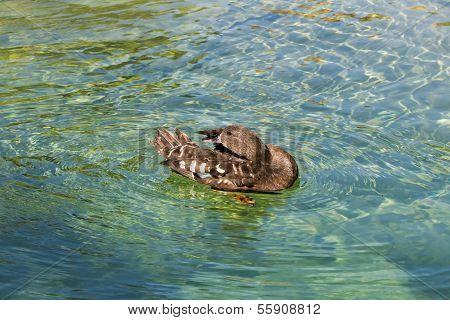 Duck In Zoo