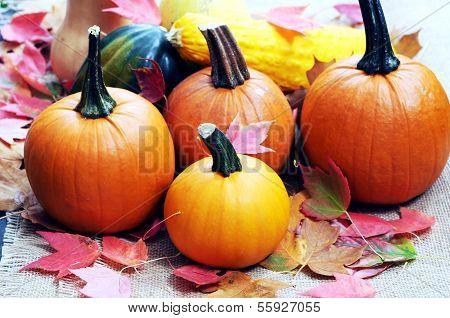 Fall Season Decoration