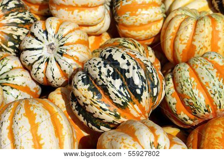 Tiger Squash Pumpking
