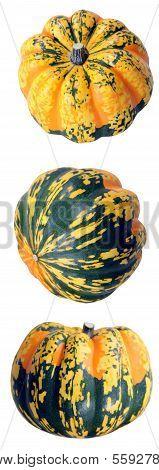 Tiger Mini Pumpkin