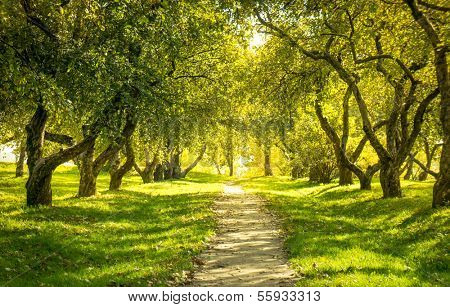 Sunlight in the green forest, spring time poster