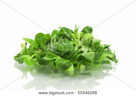 Lamb's Lettuce