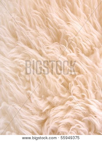 White Lambskin As Background
