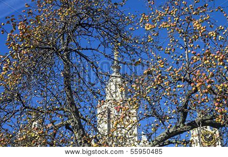 Ripe Apples Against The Moscow State University.