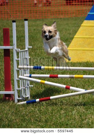 Perro de raza mixta saltando sobre un doble salto en el juicio de agilidad