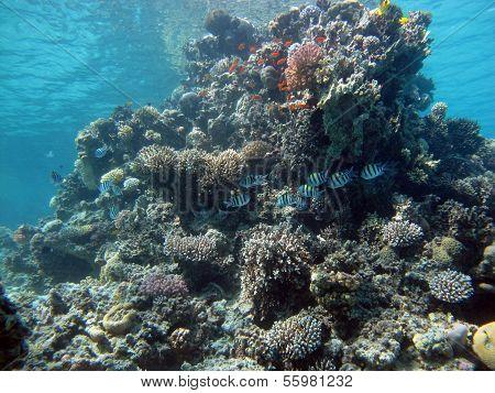Coral pinnacle