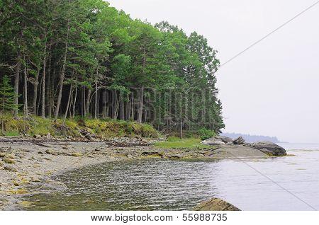Rocky Coast Of Maine