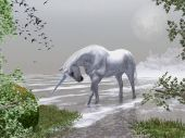 pic of white horse  - White Unicorn wading the water - JPG