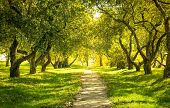 stock photo of sunny season  - Sunlight in the green forest - JPG