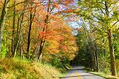 image of twisty  - Road into autumn forest - JPG