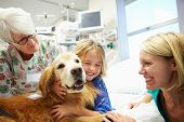 stock photo of 70-year-old  - Young Girl Being Visited In Hospital By Therapy Dog - JPG