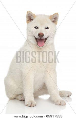 Happy Dog Portrait