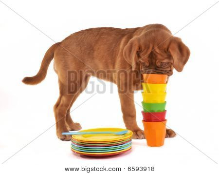 Curious Puppy Sniffing Pile Of Cups