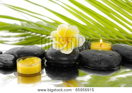 Still life with Frangipani and candle ,palm on wet zen stones