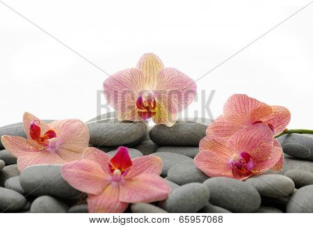 Nature stones with four pink orchid
