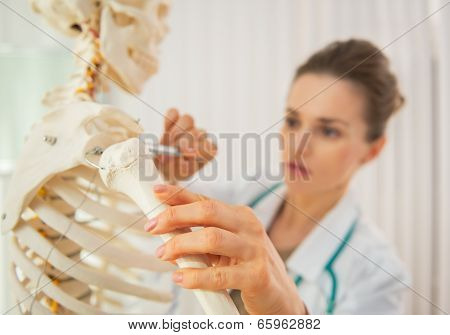 Closeup On Medical Doctor Woman Teaching Anatomy Using Human Skeleton Model