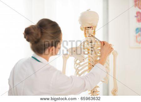 Medical Doctor Woman Teaching Anatomy Using Human Skeleton Model. Rear View