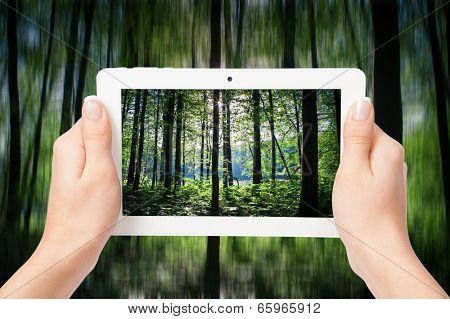 tablet computer in hand on the forest backgrounds