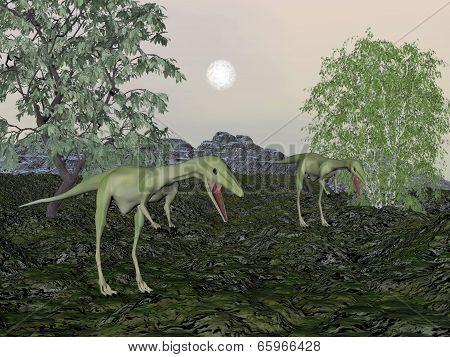 Compsognathus dinosaur mum and baby- 3D render