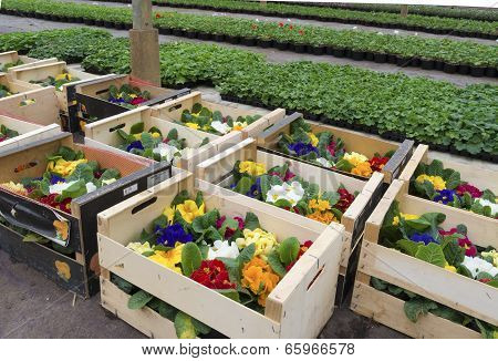 Crates With Flowers