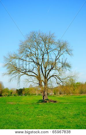 the big fish tree!
