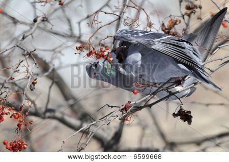 A bird feeding