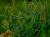 stock photo of spider web  - A blured background spider web - JPG