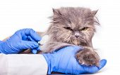 stock photo of veterinary clinic  - cat on admission to a veterinary clinic a medical background - JPG