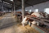 foto of cattle breeding  - farm for cattle from the inside during the day - JPG
