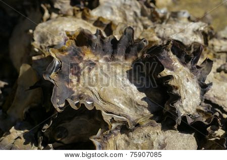 Wild Rock Oysters
