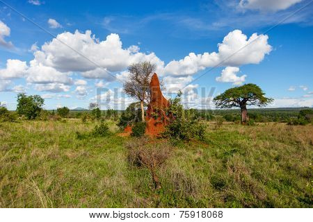 Termite mount in Tarangire national park, Tanzania Africa