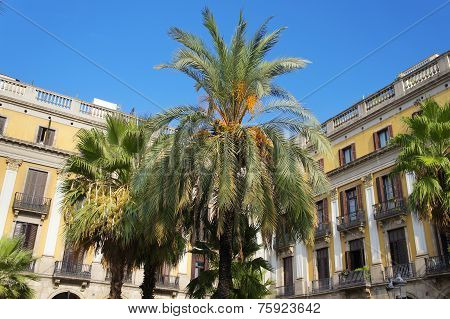 Palms at the Royal Plaza of Barcelona